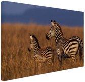 Moeder en baby zebra Canvas 80x60 cm - Foto print op Canvas schilderij (Wanddecoratie woonkamer / slaapkamer) / Dieren Canvas Schilderijen