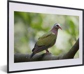 Foto in lijst - Groene smaragdduif zit in een boom fotolijst zwart met witte passe-partout klein 40x30 cm - Poster in lijst (Wanddecoratie woonkamer / slaapkamer)