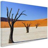 Boompjes in woestijn Canvas 120x80 cm - Foto print op Canvas schilderij (Wanddecoratie)