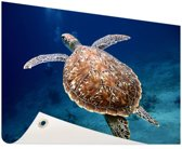 Zeeschildpad  Tuinposter 120x80 cm - Tuindoek / Buitencanvas / Schilderijen voor buiten (tuin decoratie)