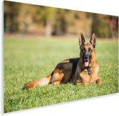 Duitse herdershond ligt op het gras Plexiglas 90x60 cm - Foto print op Glas (Plexiglas wanddecoratie)