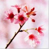 Outdoor Canvas Schilderij - Roze Bloemen