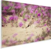 Leeuwerik omringt door de knalroze bloesems Plexiglas 90x60 cm - Foto print op Glas (Plexiglas wanddecoratie)