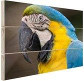 Blauw en gele ara fotoafdruk Hout 160x120 cm - Foto print op Hout (Wanddecoratie) XXL / Groot formaat!