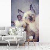 Fotobehang vinyl - Twee siamese kittens knuffelen breedte 270 cm x hoogte 400 cm - Foto print op behang (in 7 formaten beschikbaar)