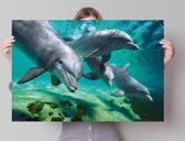 Reinders Poster Dolphins - underwater - Poster - 91,5 × 61 cm - no. 23104