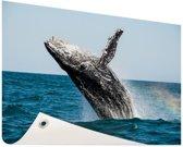 Springende walvis met regenboog Tuinposter 60x40 cm - klein - Tuindoek / Buitencanvas / Schilderijen voor buiten (tuin decoratie)