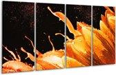 Glasschilderij Tulp | Oranje, Zwart | 160x80cm 4Luik | Foto print op Glas |  F003947