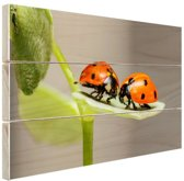 Twee lieveheersbeestjes op blad Hout 120x80 cm - Foto print op Hout (Wanddecoratie)