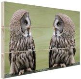 Grote grijze uilen Hout 80x60 cm - Foto print op Hout (Wanddecoratie)
