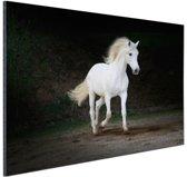 Wit paard foto Aluminium 120x80 cm - Foto print op Aluminium (metaal wanddecoratie)