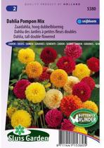 Sluis Garden - Dahlia Pompon Mix