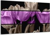 Glasschilderij Tulp | Paars, Grijs, Zwart | 120x70cm 1Luik | Foto print op Glas |  F004484