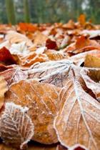 Frost on Autumn Leaves Journal