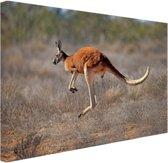 Een springende kangoeroe Canvas 60x40 cm - Foto print op Canvas schilderij (Wanddecoratie)