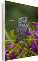Dierenportret van een bruine prieelvogel op bloemen Vurenhout met planken 20x30 cm - klein - Foto print op Hout (Wanddecoratie)