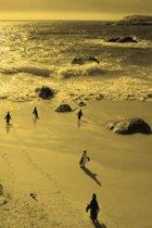 Alive! little penguin friends - Yellow duotone - Photo Art Notebooks (6 x 9 series)