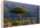 Drakenbloedboom met uitzicht op bergen bij Dixam-plateau in Jemen Vurenhout met planken 80x40 cm - Foto print op Hout (Wanddecoratie)