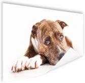 Liggende hond  Poster 120x80 cm - Foto print op Poster (wanddecoratie woonkamer / slaapkamer) / Dieren Poster