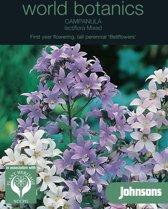 Campanula lactiflora Mixed - set van 6 stuks