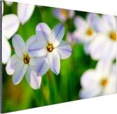 Wit-paarse lelies Aluminium 180x120 cm - Foto print op Aluminium (metaal wanddecoratie) XXL / Groot formaat!