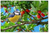 Canvas Schilderij Natuur - Kersenboom