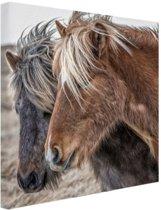 IJslandse paarden Canvas 100x100 cm - Foto print op Canvas schilderij (Wanddecoratie woonkamer / slaapkamer) / Dieren Canvas Schilderijen