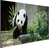 Grote panda Aluminium 90x60 cm - Foto print op Aluminium (metaal wanddecoratie)