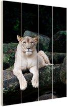 Leeuwin portret Hout 60x80 cm - Foto print op Hout (Wanddecoratie)