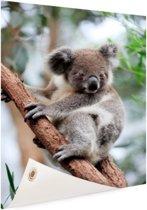 Koala op boom Tuinposter 40x60 cm - klein - Tuindoek / Buitencanvas / Schilderijen voor buiten (tuin decoratie)