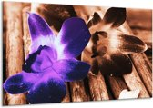 Glasschilderij Bloem | Paars, Bruin, Wit | 120x70cm 1Luik | Foto print op Glas |  F003803