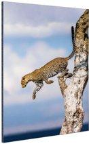 Springende luipaard Aluminium 20x30 cm - Foto print op Aluminium (metaal wanddecoratie)