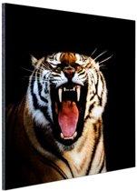 Brullende tijger zwarte achtergrond Aluminium 50x50 cm - Foto print op Aluminium (metaal wanddecoratie)