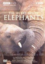 Special Interest - Secret Life Of Eelephants