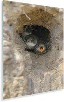 Jonge kustlijnen in een nest Plexiglas 120x180 cm - Foto print op Glas (Plexiglas wanddecoratie) XXL / Groot formaat!