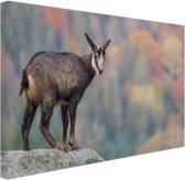 Geit op een rots  Canvas 30x20 cm - Foto print op Canvas schilderij (Wanddecoratie)