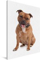 Poserende Staffordshire Bull Terrier Canvas 120x180 cm - Foto print op Canvas schilderij (Wanddecoratie woonkamer / slaapkamer) / Huisdieren Canvas Schilderijen XXL / Groot formaat!