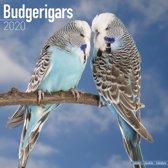 Budgerigars Calendar 2020