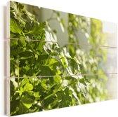 Peterselie bloeiend in het zonlicht Vurenhout met planken 60x40 cm - Foto print op Hout (Wanddecoratie)