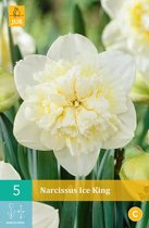 Narcissus Ice King - dubbelbloemige narcis - 2 sets