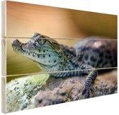 Baby krokodil Hout 30x20 cm - klein - Foto print op Hout (Wanddecoratie)