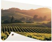 Wijngaarden in de Verenigde Staten Tuinposter 200x100 cm - Tuindoek / Buitencanvas / Schilderijen voor buiten (tuin decoratie) XXL / Groot formaat!