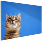 FotoCadeau.nl - Kat met blauwe lucht Glas 60x40 cm - Foto print op Glas (Plexiglas wanddecoratie)