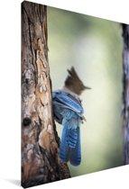 Foto van een gaai tijdens de lente Canvas 90x140 cm - Foto print op Canvas schilderij (Wanddecoratie woonkamer / slaapkamer)
