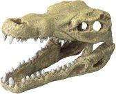 Ebi Decor Schedel Krokodil M Medium 19.5x9.5x10.5 cm