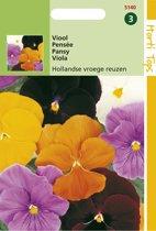Hortitops Zaden - Viool Hollandse Reuzen (Viola)