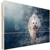 Zonnestralen langs de Maltezer hond Vurenhout met planken 120x80 cm - Foto print op Hout (Wanddecoratie)