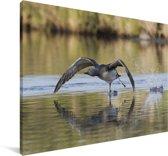 Roodkeelduiker vliegt over het water Canvas 90x60 cm - Foto print op Canvas schilderij (Wanddecoratie woonkamer / slaapkamer)