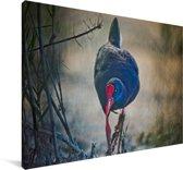 Purperkoet bij het water Canvas 30x20 cm - klein - Foto print op Canvas schilderij (Wanddecoratie woonkamer / slaapkamer)