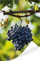 Eenzame tros paarse druiven in Italië Poster 80x120 cm - Foto print op Poster (wanddecoratie woonkamer / slaapkamer)